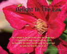 05-DelightInTheLaw_RenewingOfTheInnerMan_8x10L_v1_01-135