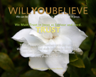 11-TRUST_WillYOUBelieve_X7_8x10L_v1_03-135