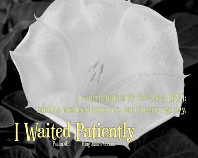 01-InclinedAndHeard_IWaitedPatiently_8x10L_v1_02-Preview